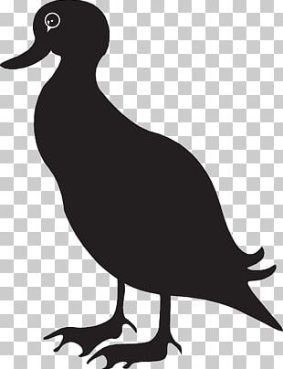 American Black Duck PNG Images, American Black Duck Clipart.