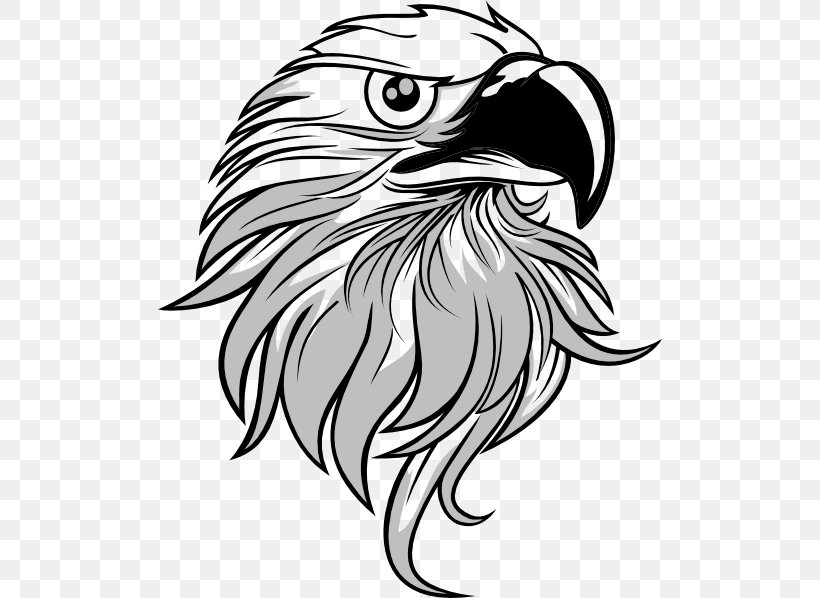 Bald Eagle Clip Art, PNG, 504x598px, Bald Eagle, Art, Beak.