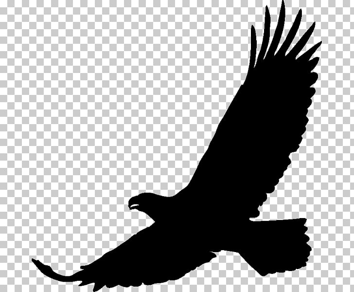 Art Drawing, black eagle PNG clipart.