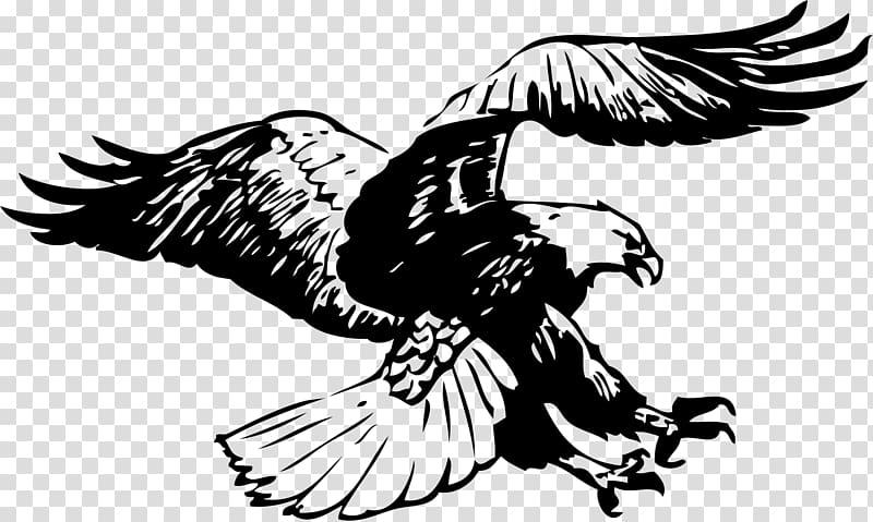 Black bald eagle flying , Bald Eagle Black.