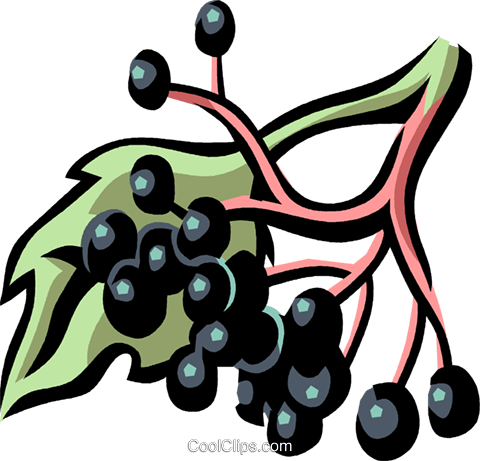 elderberry Royalty Free Vector Clip Art illustration.