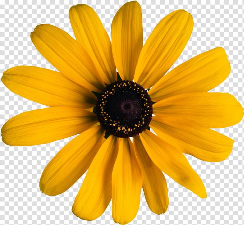 Object Petals, yellow black.