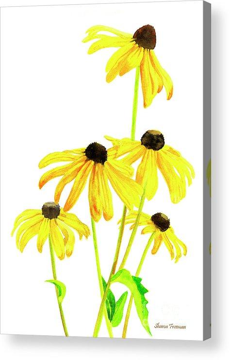 Yellow Black Eyed Susans Acrylic Print.