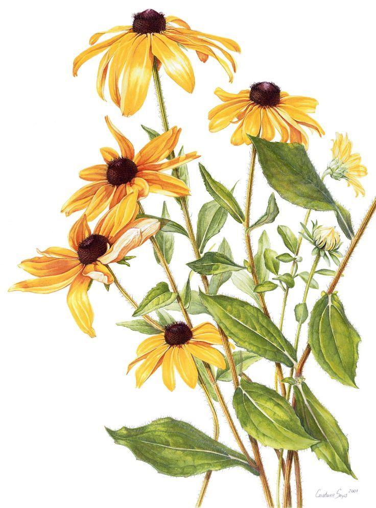 Pin by Caroline Miller on Botanical Prints in 2019.