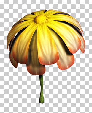 10 wilted flower PNG cliparts for free download.