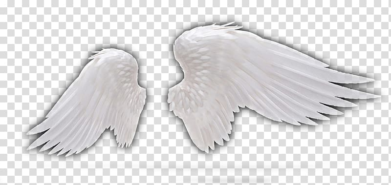 White wings illustration, Feather Wing Angel, Angel Wings.