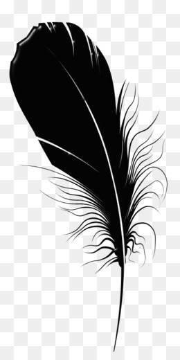 Black Feathers PNG and Black Feathers Transparent Clipart.