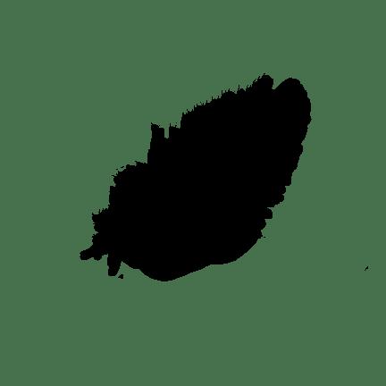 Light Black Feather transparent PNG.