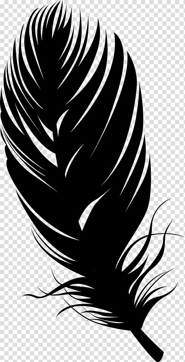 White and black feather illustration, Bird Feather.