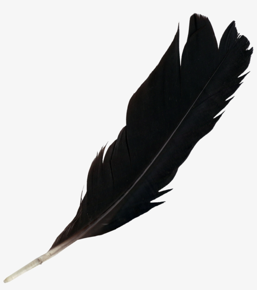 Black Feather Png.