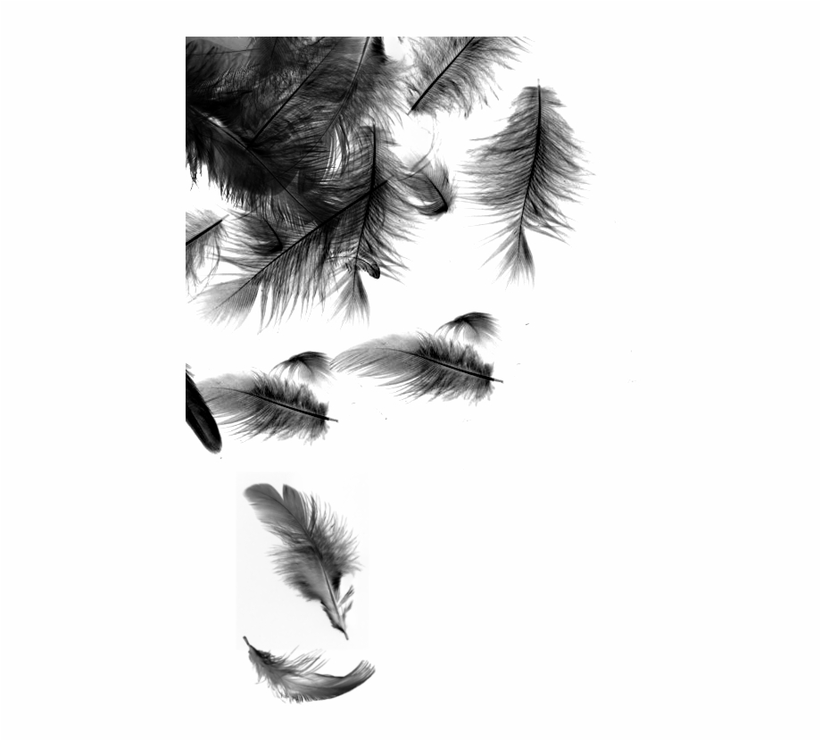 Black Feathers Falling , Png Download.