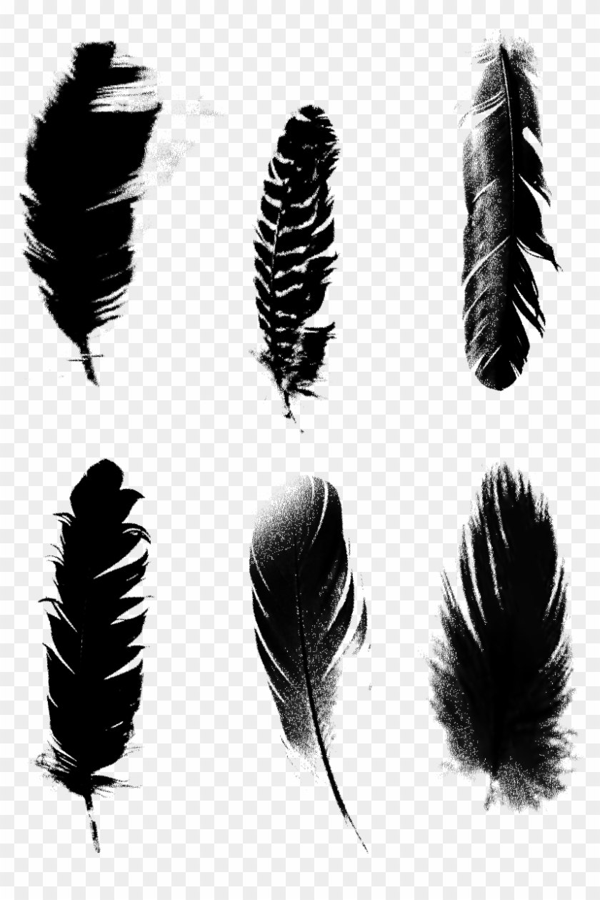 Black Feathers Commercial Minimalist Png และ Psd.