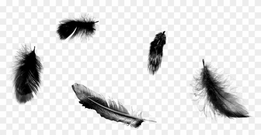 Black Feathers Falling Png, Transparent Png (#91008), Free Download.