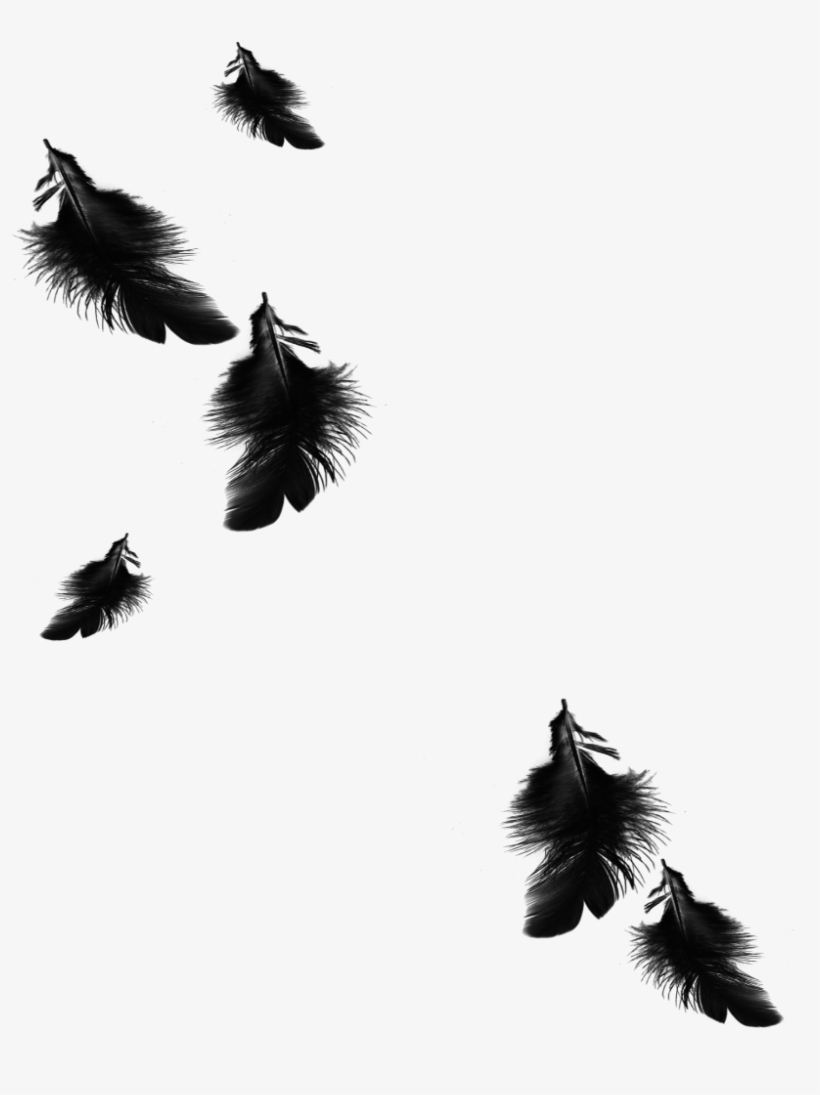 Mq Black Feather Feathers Floating Falling.
