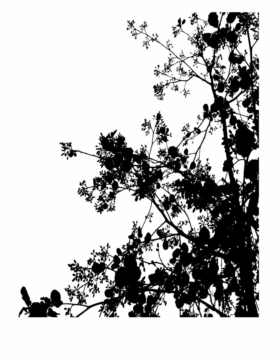 Black Flowers Tumblr Png , Png Download.