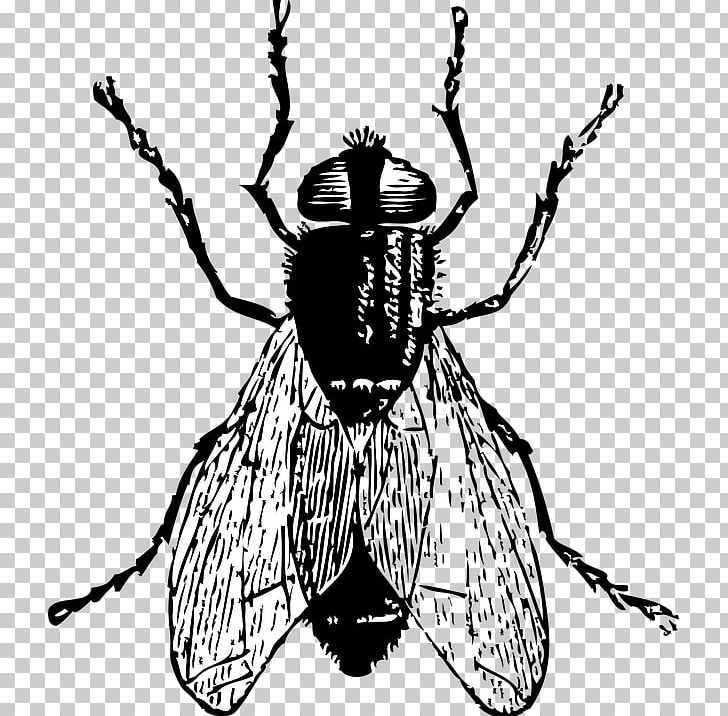 Fly Drawing PNG, Clipart, Arthropod, Artwork, Black And.