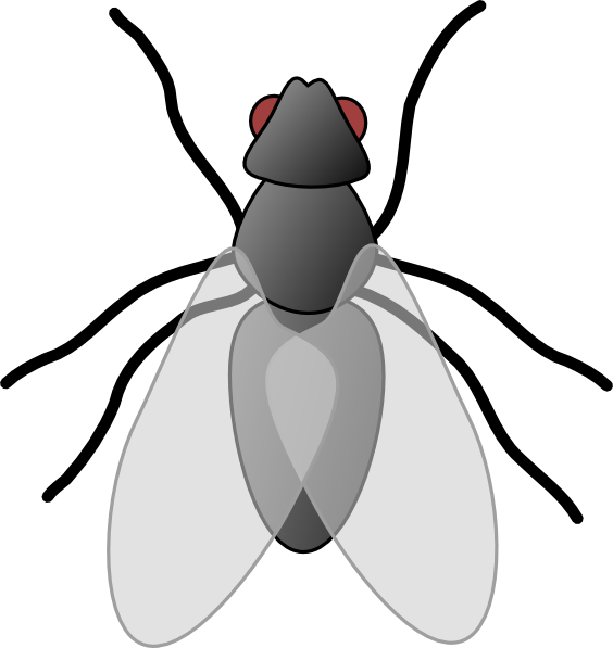 Free Black Fly Cliparts, Download Free Clip Art, Free Clip.