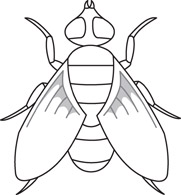 2539 Fly free clipart.