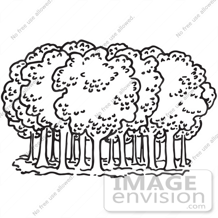 Clipart Of Trees In A Forest In Black And White.