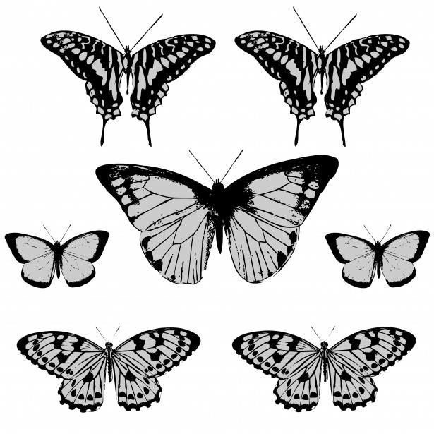 Butterfly Clipart Free Stock Photo.