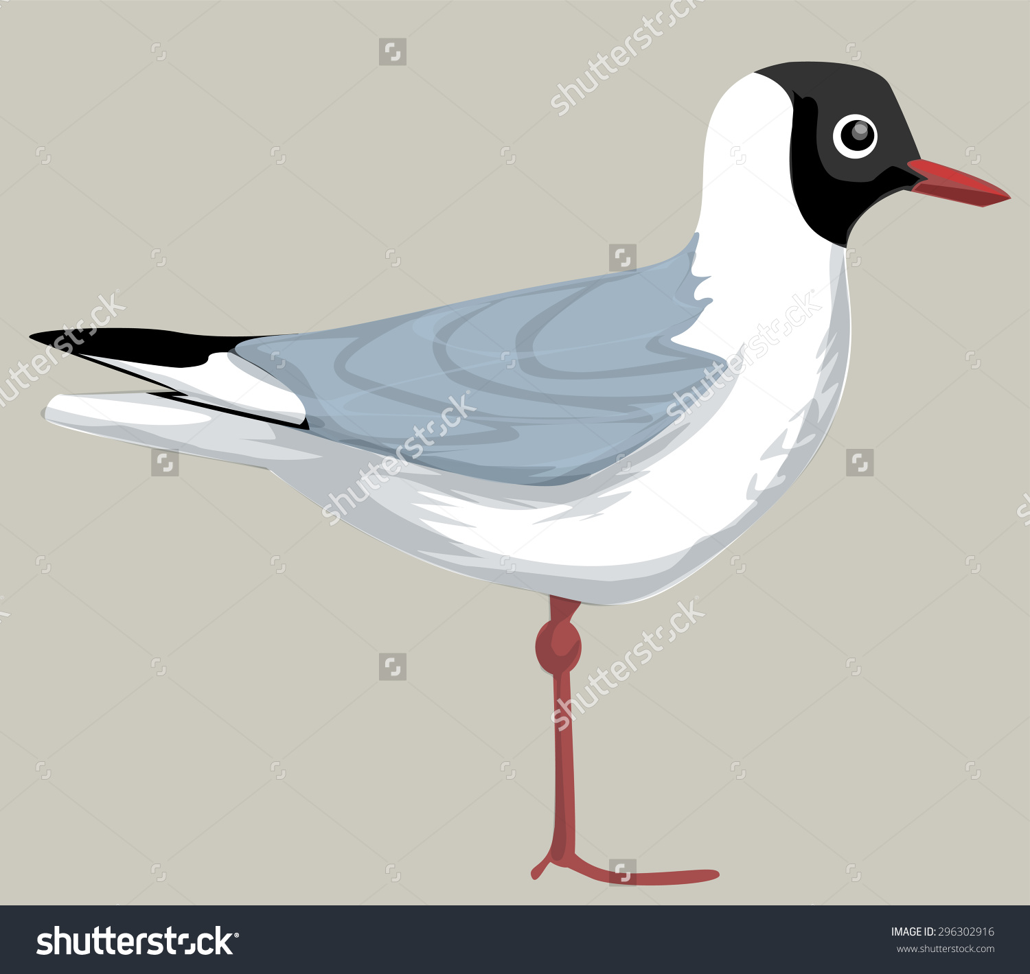 Black Headed Gull, Isolated On White, Sea Bird, Vector.