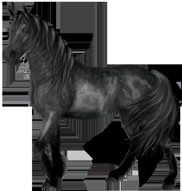 Transparent Black Horse.