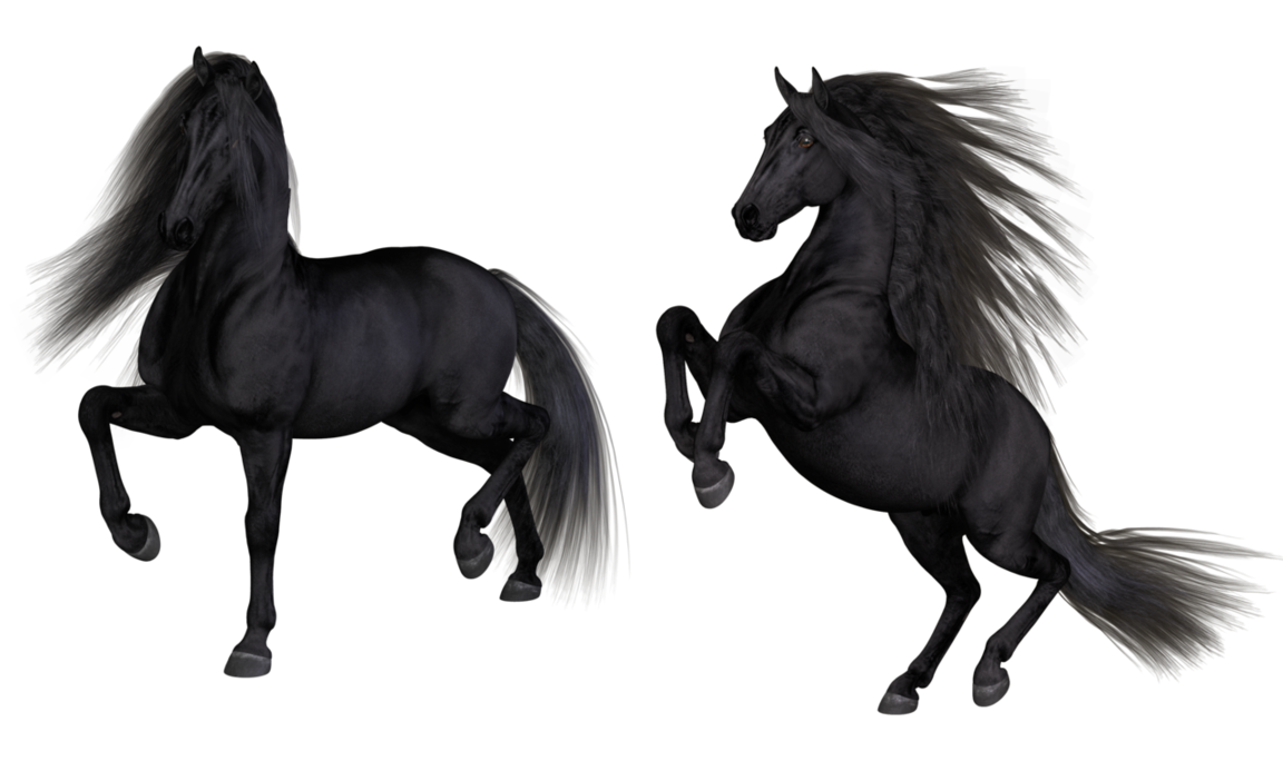 Black Horse Png (99+ images in Collection) Page 2.