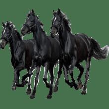 Black Horses transparent background image.