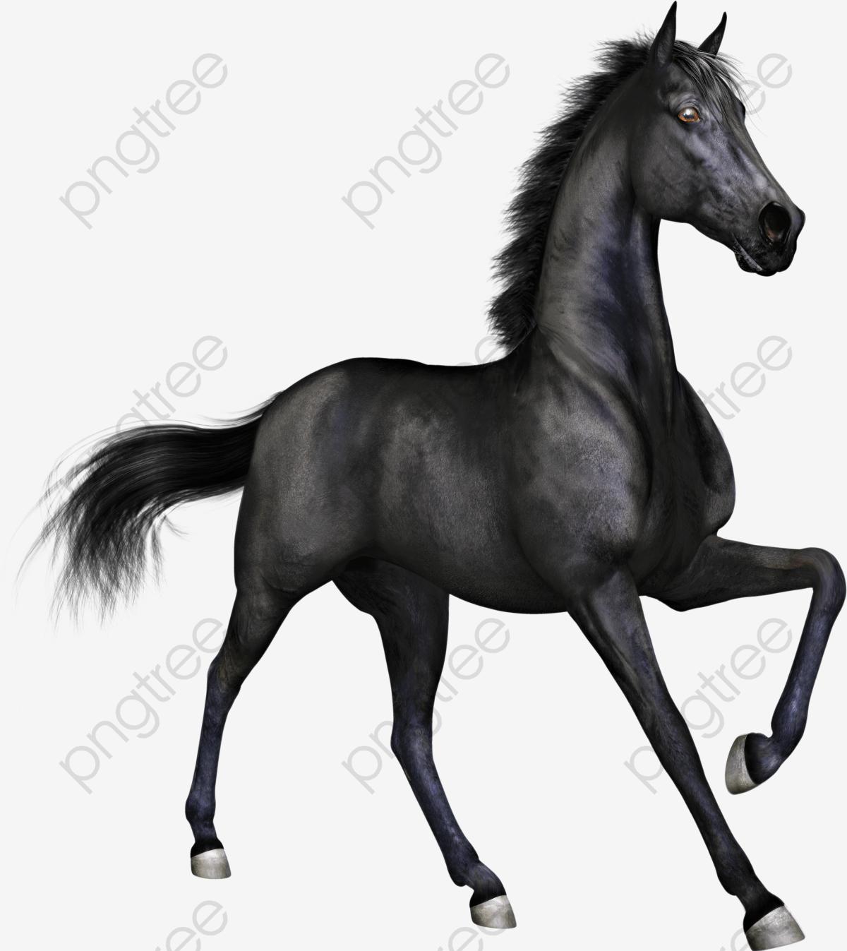 Black Stallion, Fine Horse, Black, Horse PNG Transparent Image and.