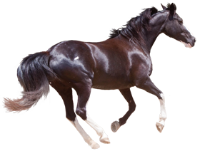 Horse PNG Images, Horse Clipart free download.