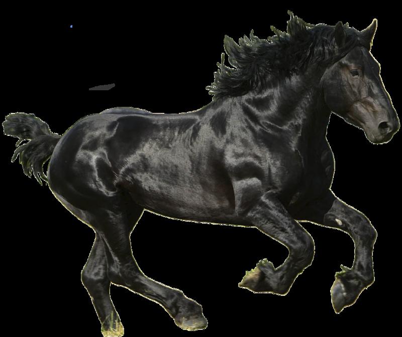 Black Horse Running PNG Image With Alpha Transparent Background #11.