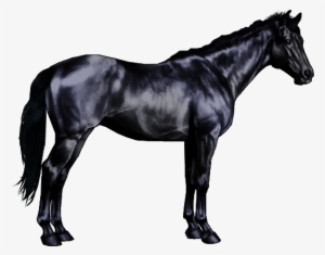Black Horse PNG, Transparent Black Horse PNG Image Free Download.