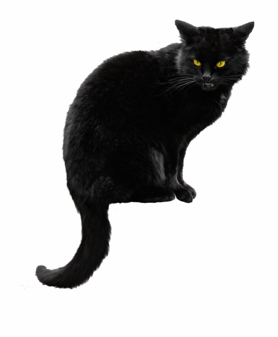 15 Black Kitten Png For Free Download On Mbtskoudsalg.
