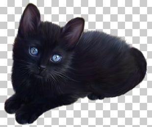 Black Kitten PNG Images, Black Kitten Clipart Free Download.