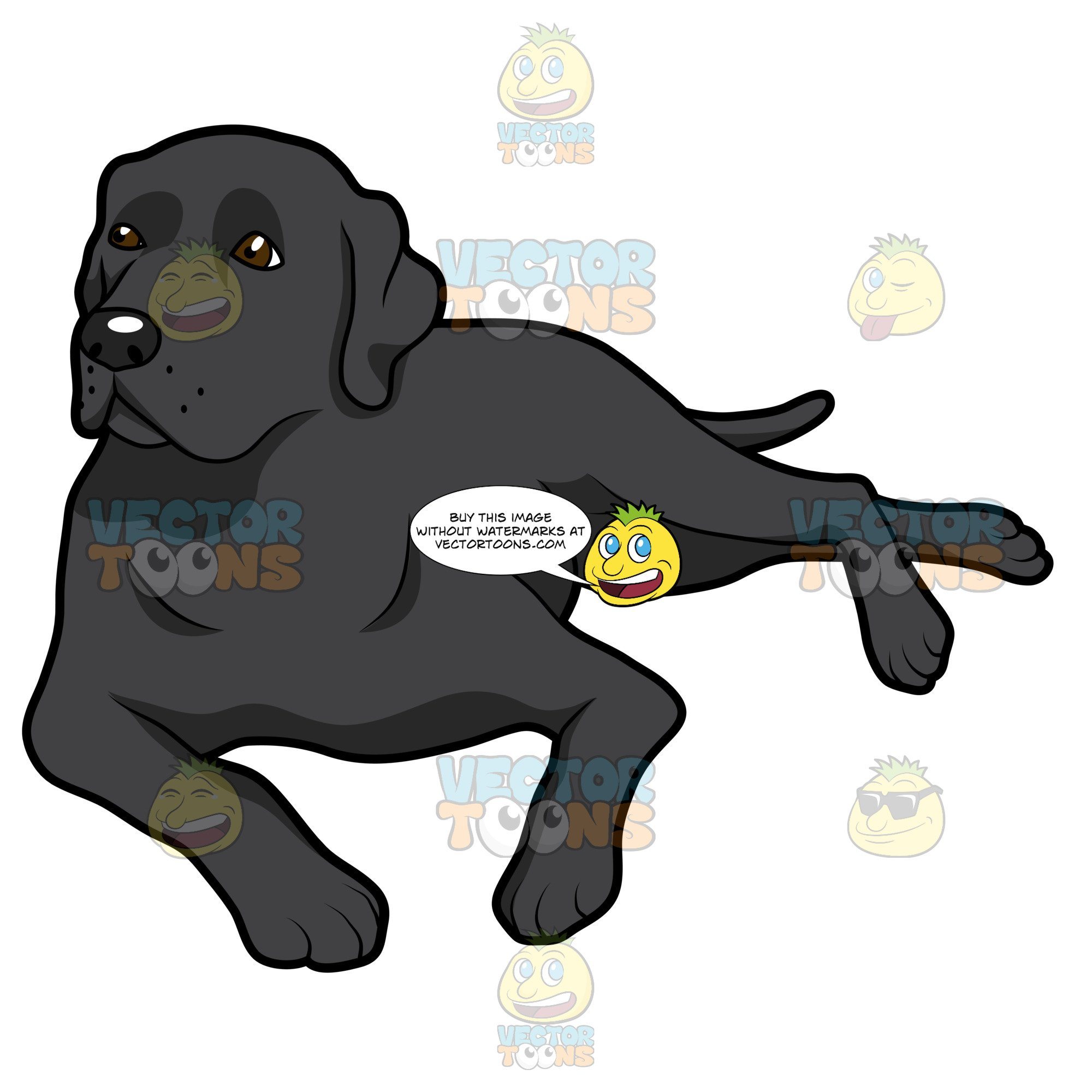 Black Labrador Lying Down On Its Side.