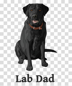 Labrador Retriever Black dog Puppy , Black Pug transparent.