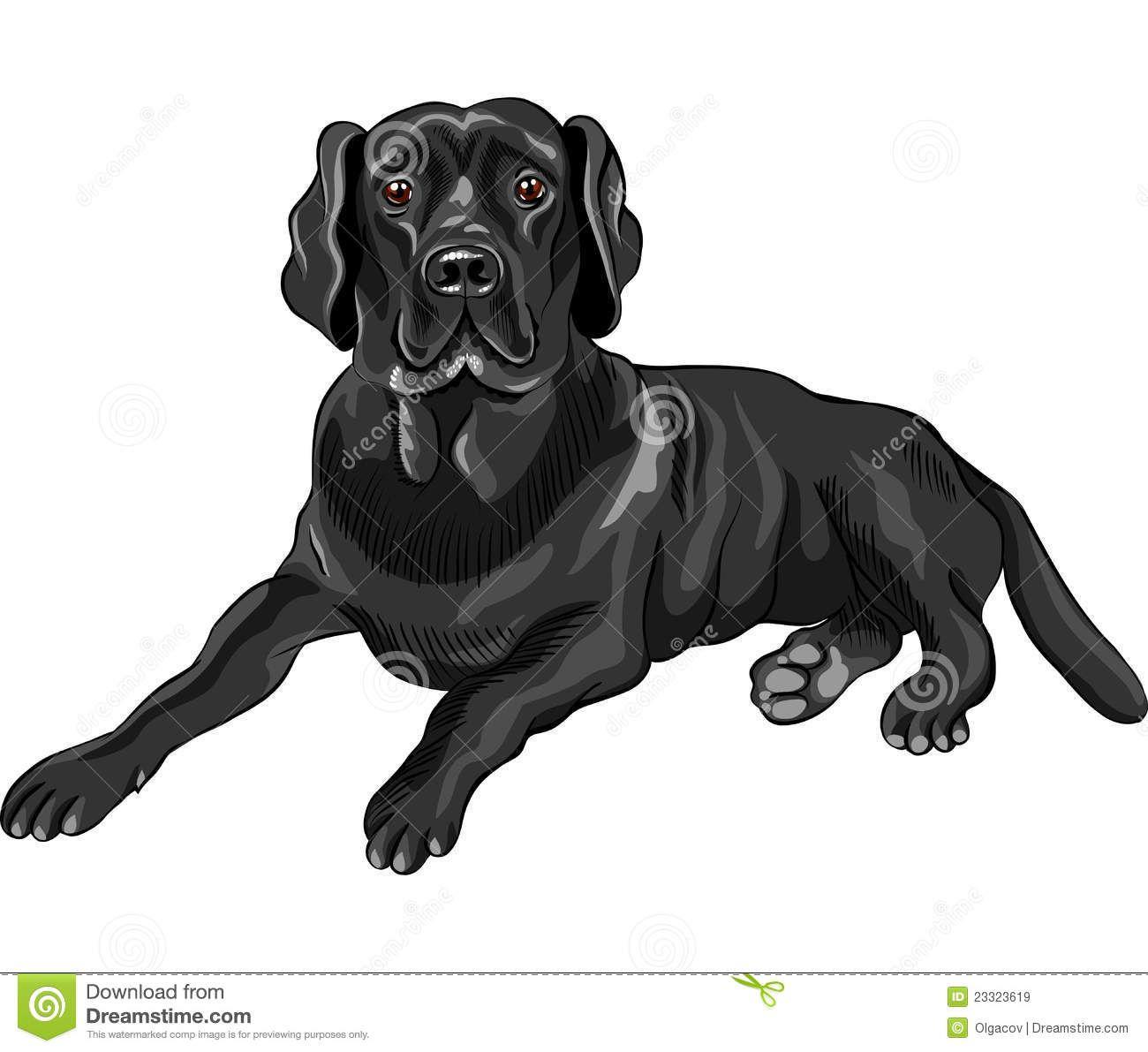 Labrador Stock Illustrations, Vectors, & Clipart.