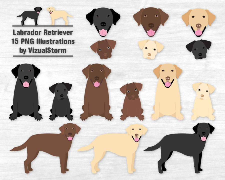 Labrador Retriever Clipart Black Lab Chocolate Lab Yellow Lab Labrador  Puppy Labrador Illustration Labrador Dog Clipart Graphics Lab Puppies.