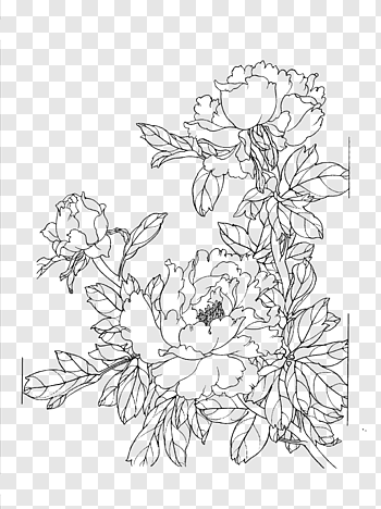Line drawing cutout PNG & clipart images.
