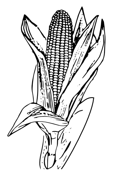 Corn Plant Black And White Clipart.