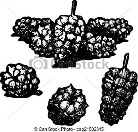 Vector Clip Art of mulberry.