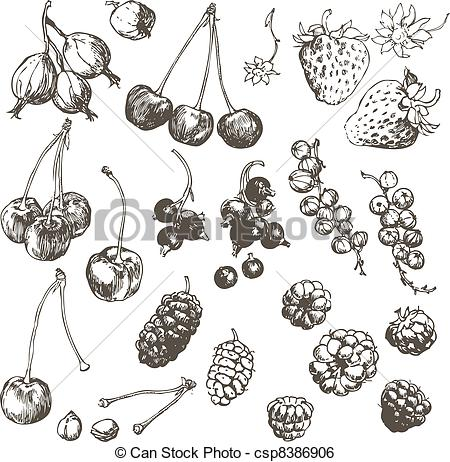 Mulberry Clipart and Stock Illustrations. 2,898 Mulberry vector.