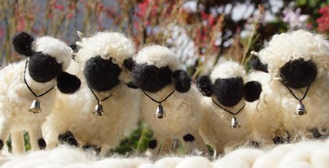 Buy a Valais Blacknose Sheep.