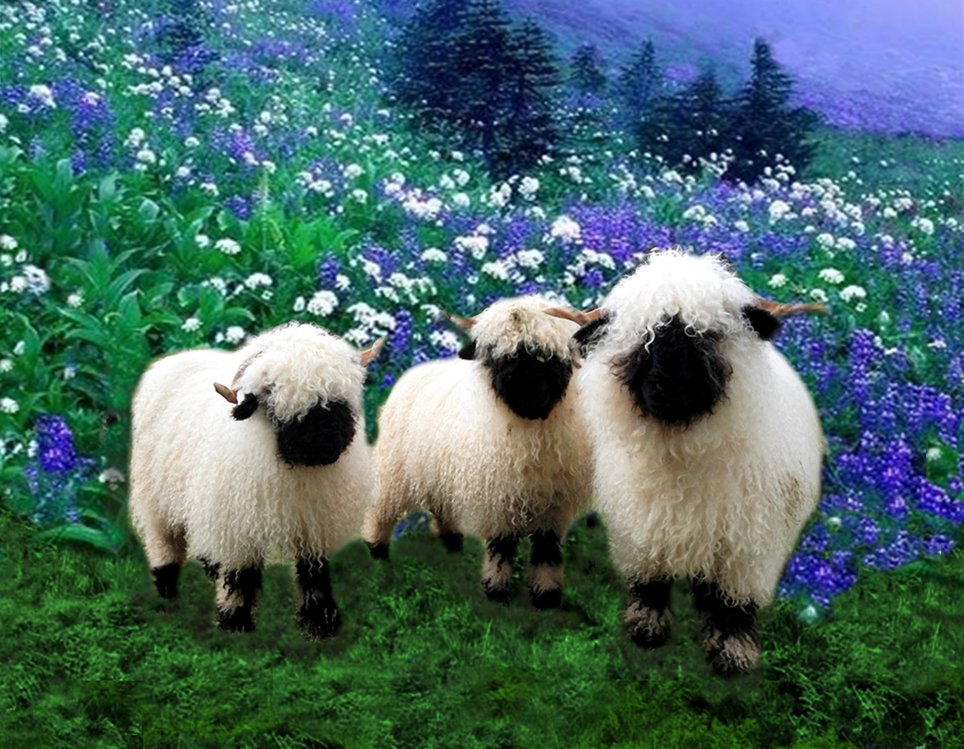 Black nosed sheep clipart 20 free Cliparts | Download ...