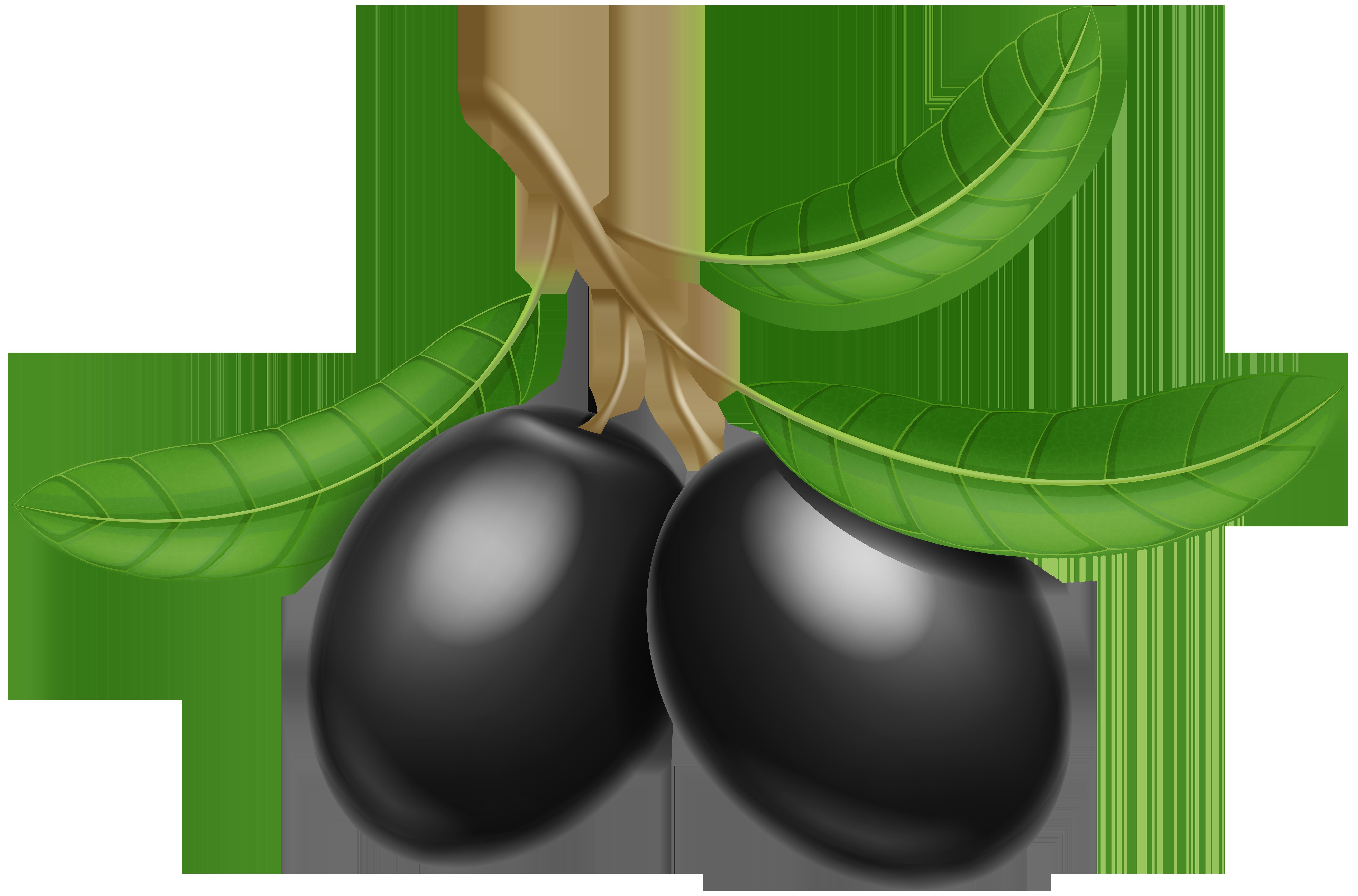 Black Olives Transparent PNG Clip Art Image.