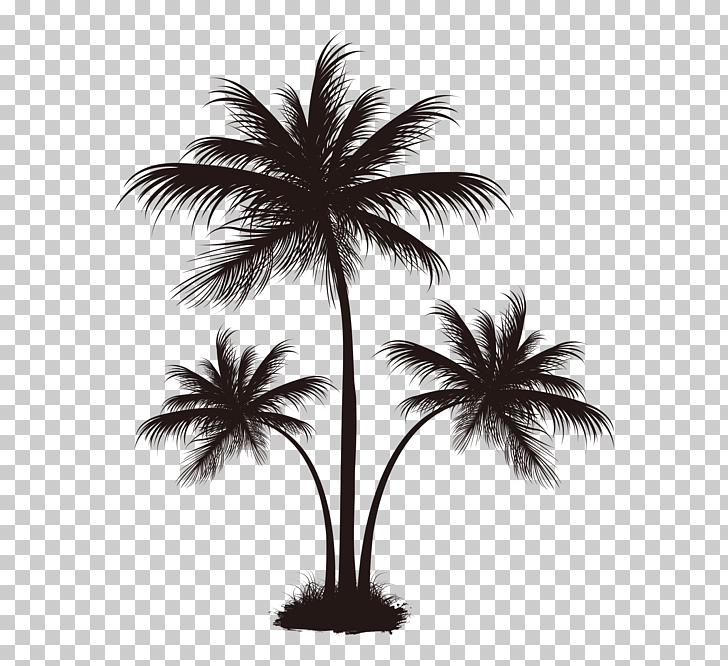 Arecaceae Coconut Tree, Black palm tree pattern, silhouette.