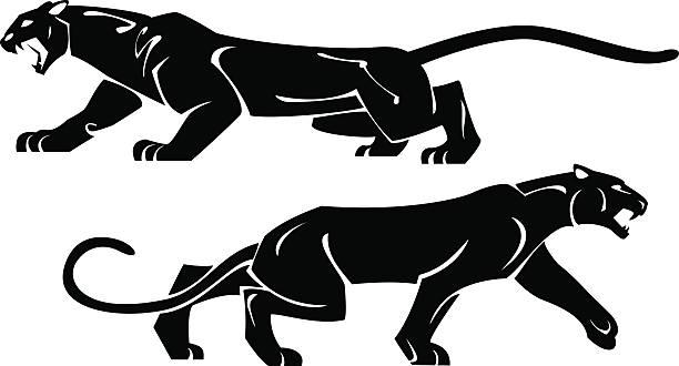 Best Black Panther Illustrations, Royalty.