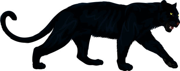Black Panther Clipart & Free Black Panther Clipart.png.