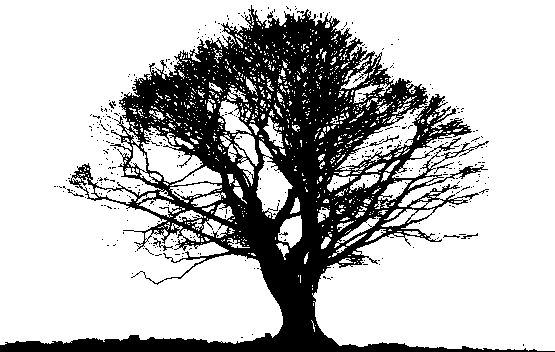 Download Black Tree Photos HQ PNG Image.