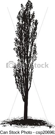 Clip Art of Poplar Tree.